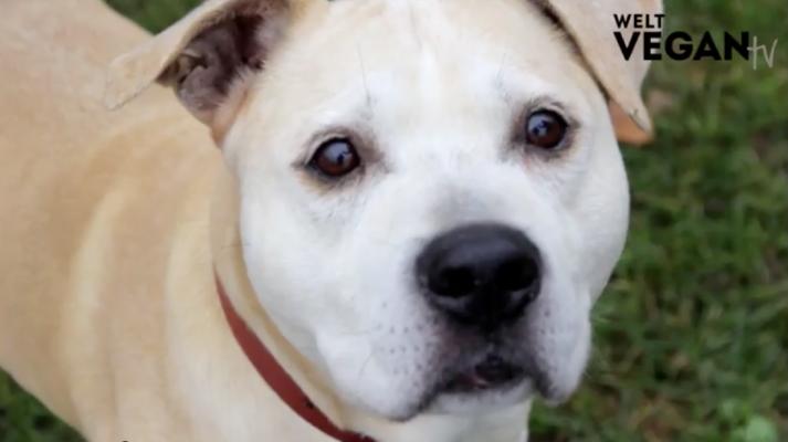 Pascha – Ein Hund zum verlieben und spielen