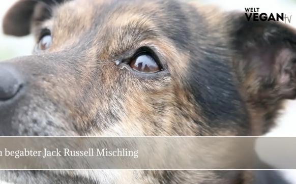 Fino – ein begabter Jack Russell Mischling