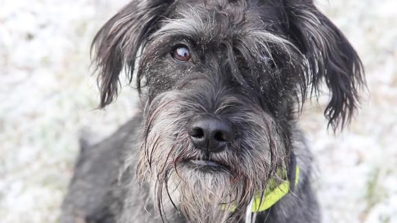 Riley – Ein Hund mit Herz und Verstand