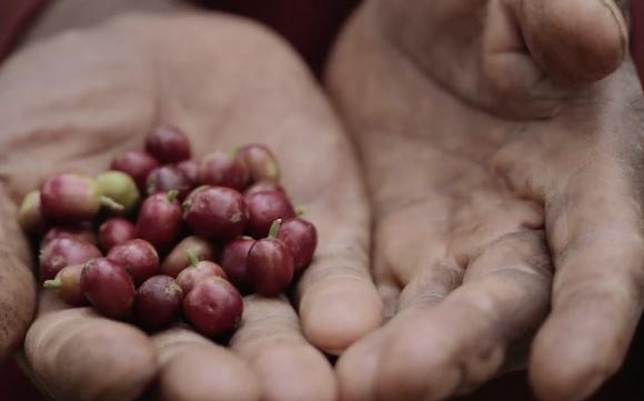 Coffee Circle – Guter Kaffee, gutes Gewissen