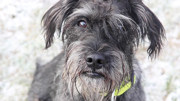 Riley – Ein Hund mit Herz und Verstand   ++Vermittelt++